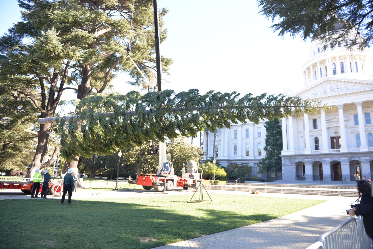 State's Official Christmas Tree Arrives